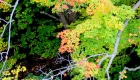 Canada, Ontario, Maple leaf, Toronto, fall colour, iCorridor Moments