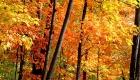 Canada, Ontario, Maple leaf, Toronto, fall colour, iCorridor Moments