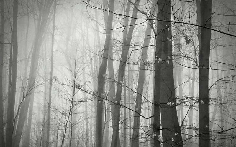 4 Smartphone Photos Showing the Power of  Fog in Photography