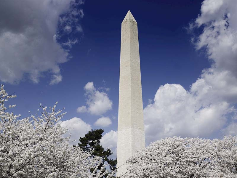 Celebrating the Arrival of Spring in Washington DC, the Cherry Blossom Capital