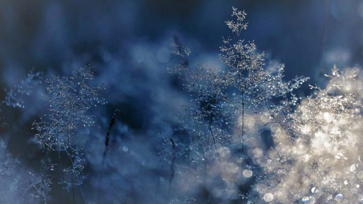 5 Tips for Photographing the Snow