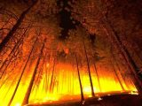 Why are There So Many Wildfires and What should We Do?