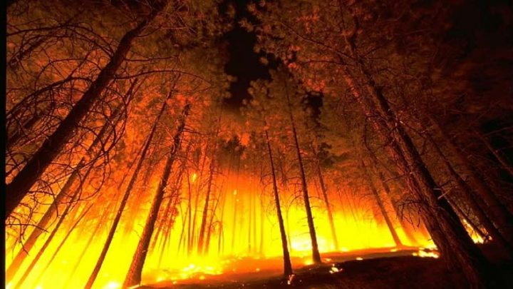 Why are There So Many Wildfires?