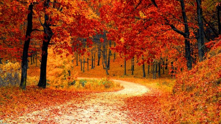 6 Ontario Getaways to Enjoy the Fall Colour